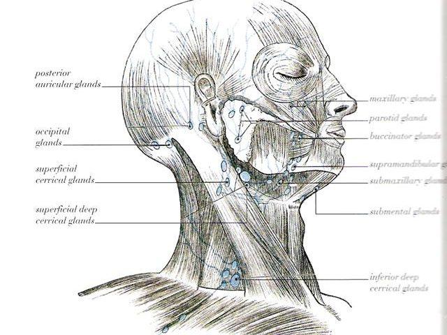 Catarrh, Sinus Problems & Manual Lymph Drainage