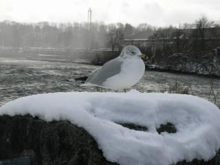 Winter Bird from MLD Kent